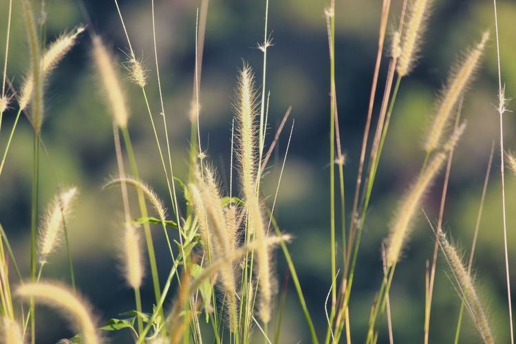Cereal Plant Agriculture Field Close-up Grass Plant Ear Of Wheat Timothy Grass Farmland Blade Of Grass Wheat Crop  Straw Cultivated Land Rye - Grain Rice Paddy Oilseed Rape Stalk Bale  Oat - Crop Combine Harvester Hay Bale Agricultural Field Farm Barley Grain