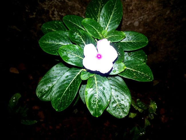 From my Garden :-* Open Edit Flowers Garden Check This Out GalaxyGrand Nightphotography Waterdrops