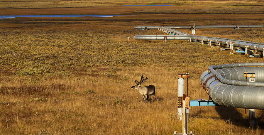 Природа Тундра заполярье север озеро трава газопровод