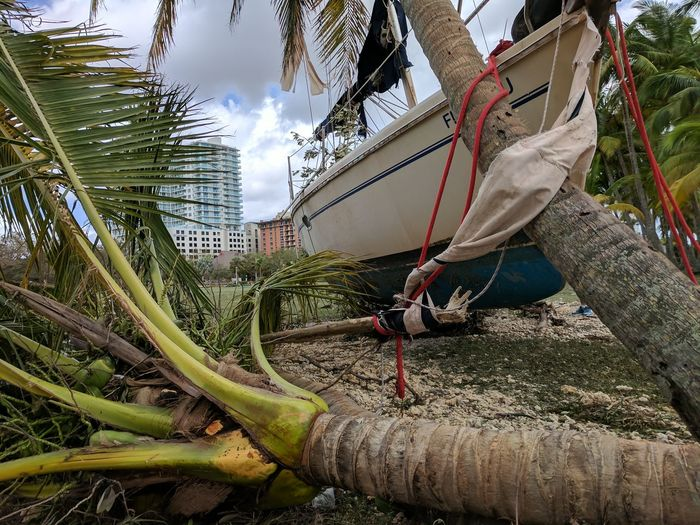 Sailboat out of place after Hurricane Irma Storm Damage Nautical Vessel Storm Surge Damage Storm Surge Hurricane Irma 2017 Tree Palm Tree Storm Cloud Sailboat Outdoors Close-up
