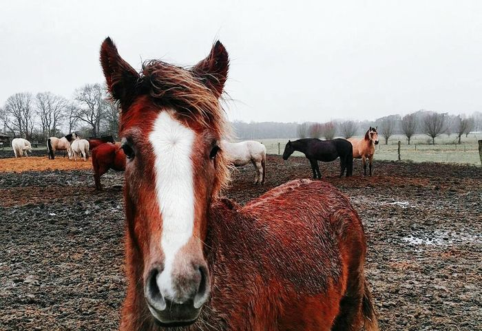 Domestic Animals Animal Themes Horse Mammal Looking At Camera Portrait Livestock Animal Standing Day Outdoors Sky Close-up Nature No People