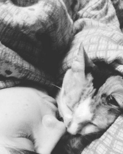 Hello World ✌ Love ♥ Vibe E Positividade ✌ Ameizing Animals Perfect