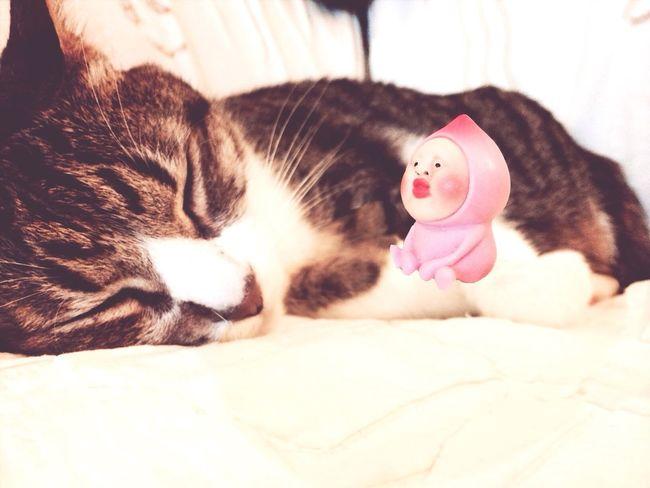 Kobito Cat Floating