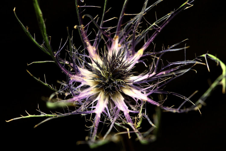 Odd little flower I found in a bouquet. Beauty In Nature Close-up EyeEmNewHere Flower Leviathan Photography Nature Nature Photography Plant Purple Flower Still Life Photography