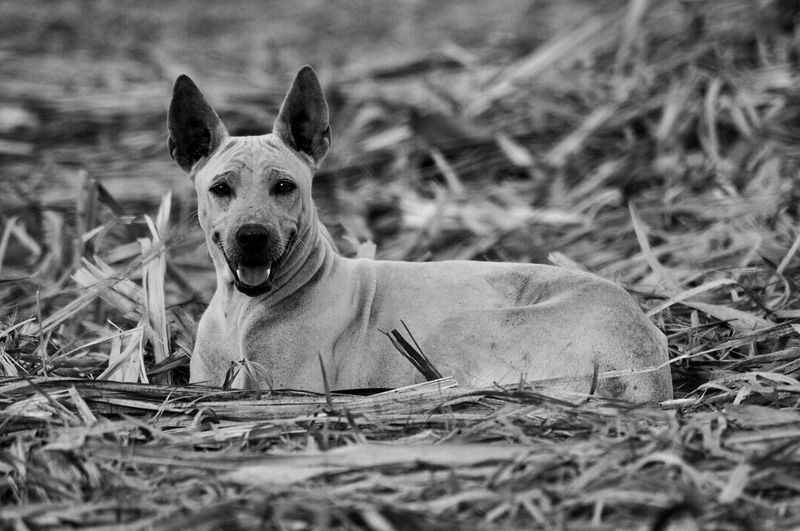 a dog with no name 🐶 Dog Animal Themes Outdoors B&w Midsummer Day Doglovers Animal Pets Friend Thailand