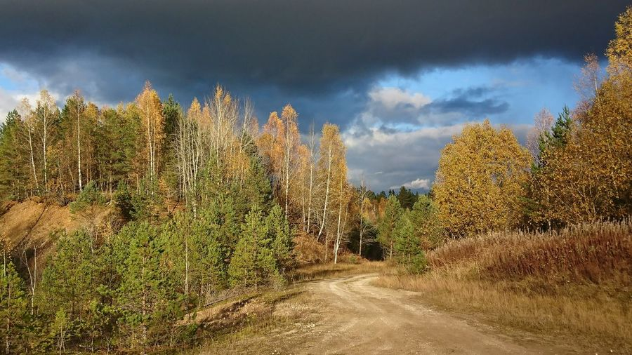 Cloud - Sky Outdoors Landscape No People Beauty In Nature Estonia Sony XZ Tree Nature