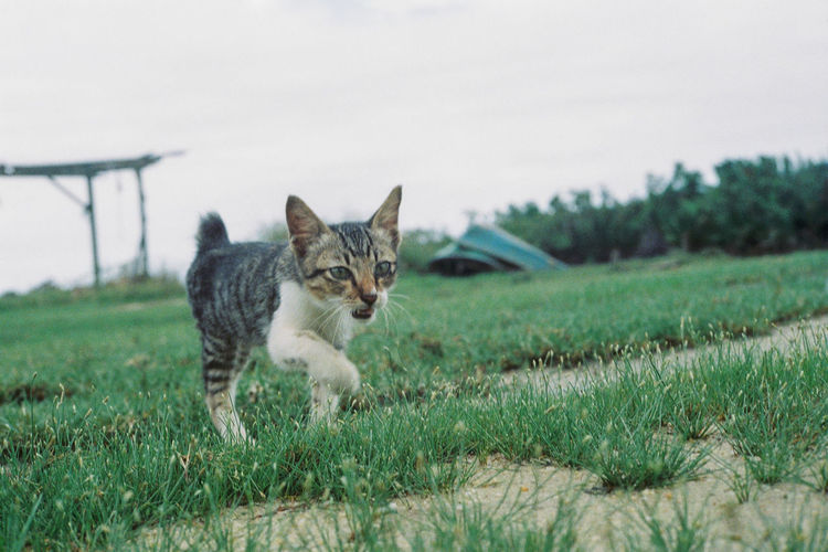 Portrait of cat on field against sky