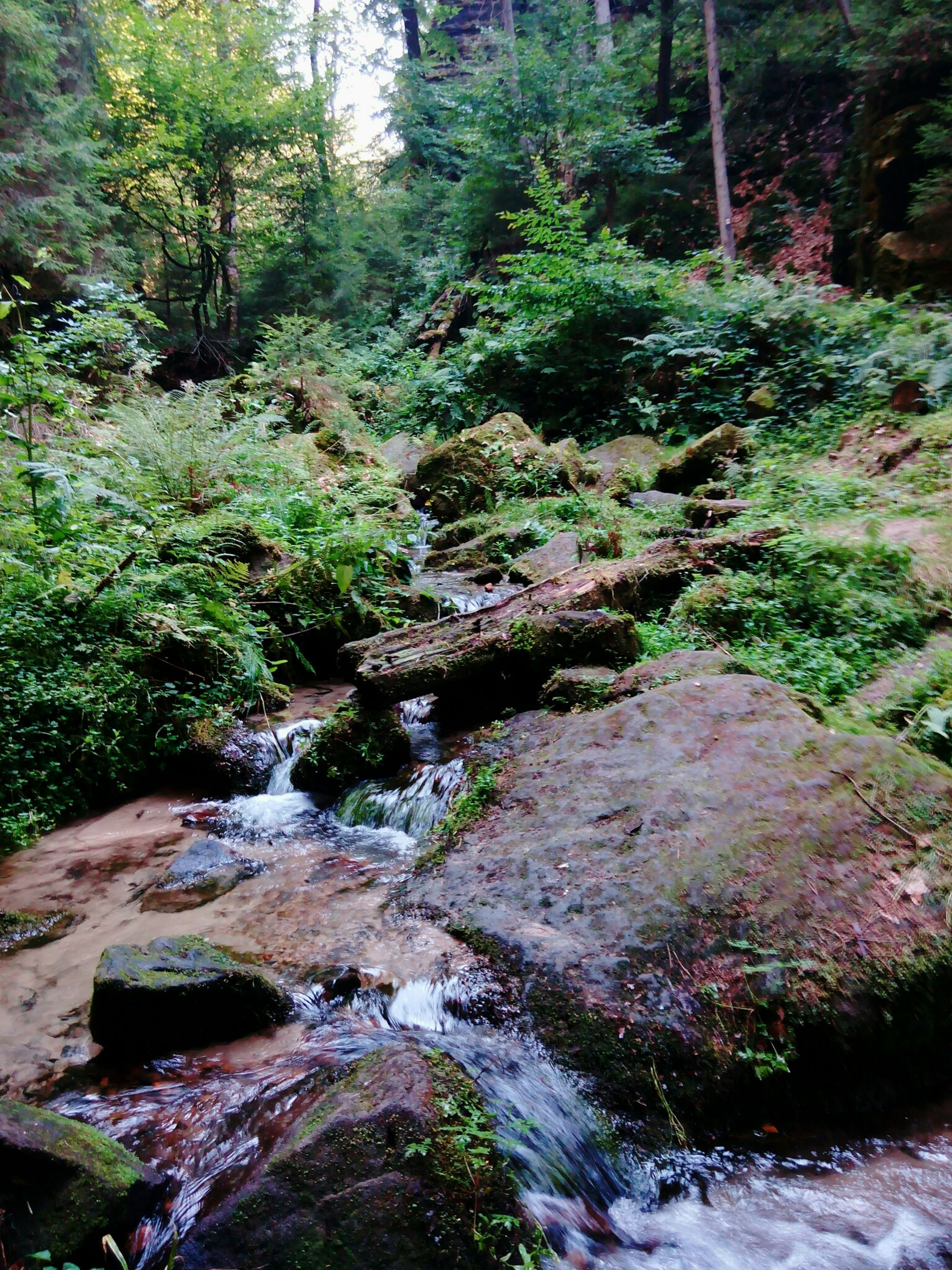 tree, forest, growth, tranquility, nature, rock - object, stream, beauty in nature, moss, tranquil scene, green color, scenics, plant, non-urban scene, flowing water, day, tree trunk, woodland, outdoors, no people
