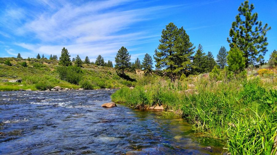 Time on the river. Nature Fly Fishing River Truckee River Truckee, Ca River View Landscape
