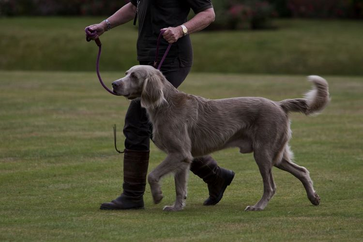 Low Section Of Person Walking With Dog On Field