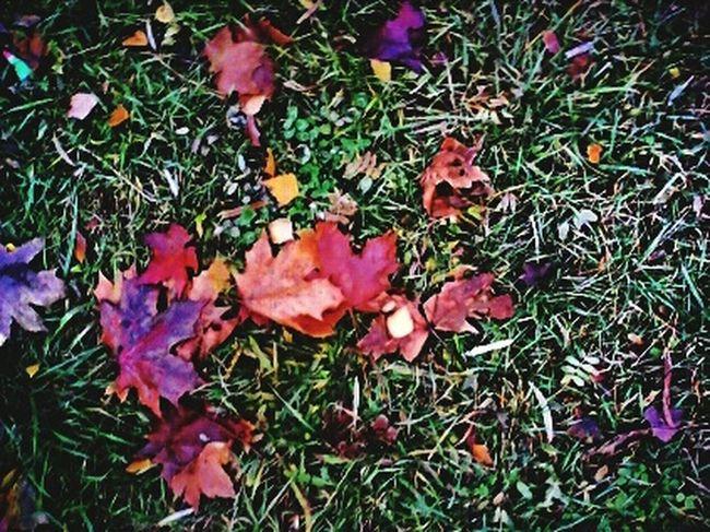 EyeEm Nature Lover Eye4photography  Autumn Leaves Autumn Colors Autumn листья желтые осень Осень 🍁🍂 EyeEm Gallery EyeEm Best Shots