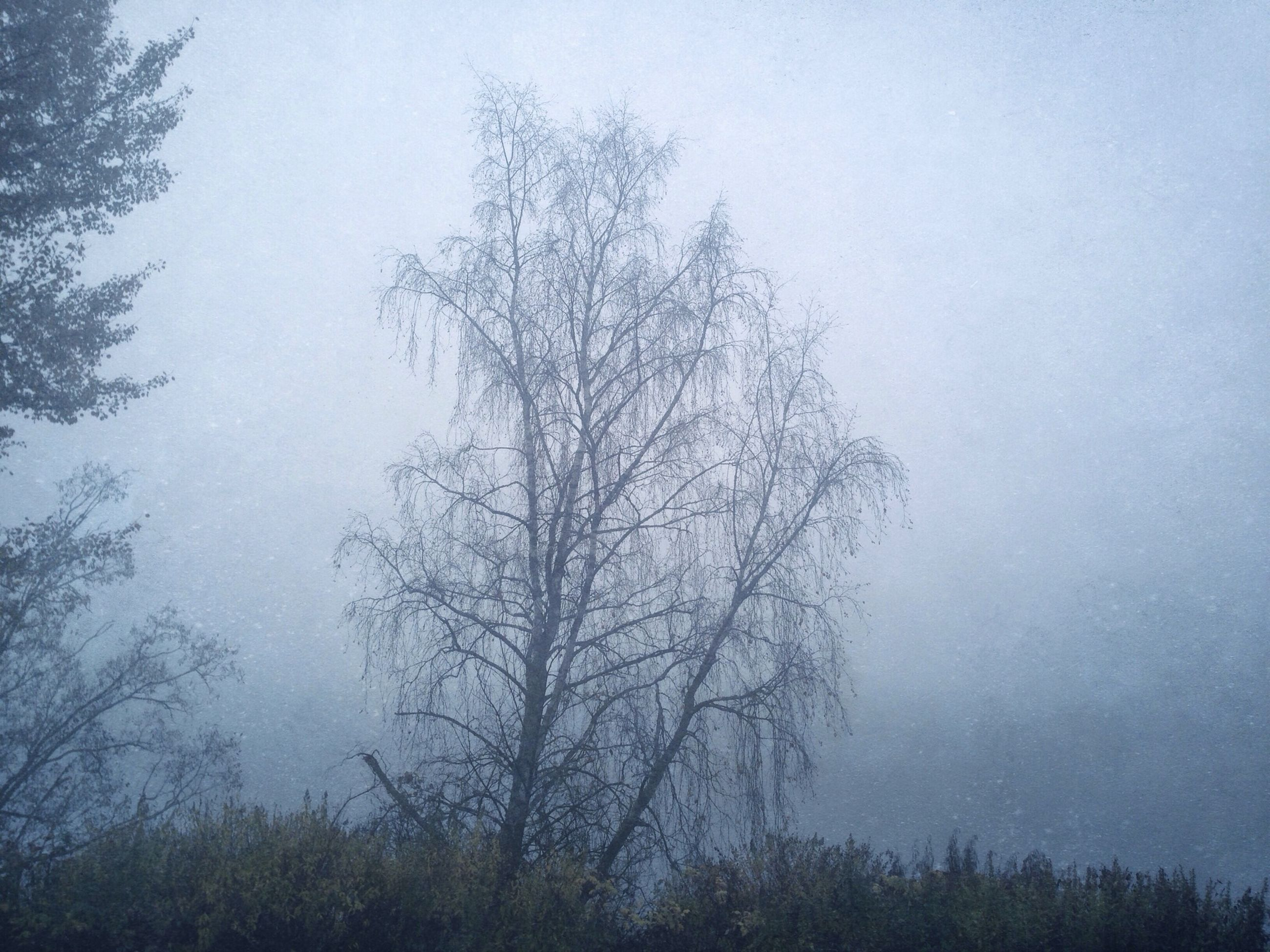 tree, tranquility, fog, tranquil scene, bare tree, beauty in nature, nature, low angle view, branch, scenics, foggy, growth, sky, forest, weather, non-urban scene, day, outdoors, idyllic