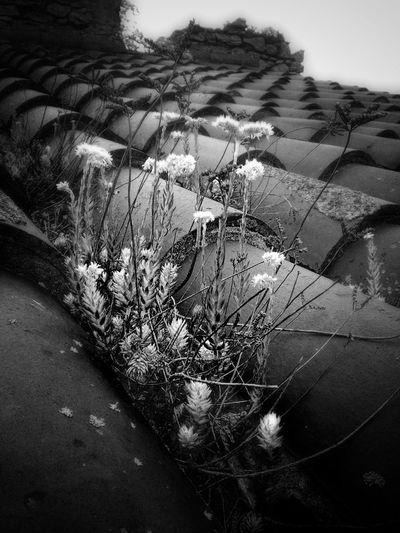 On the roof Bw_collection EyeEm Best Shots - Black + White Blackandwhite Monochrome