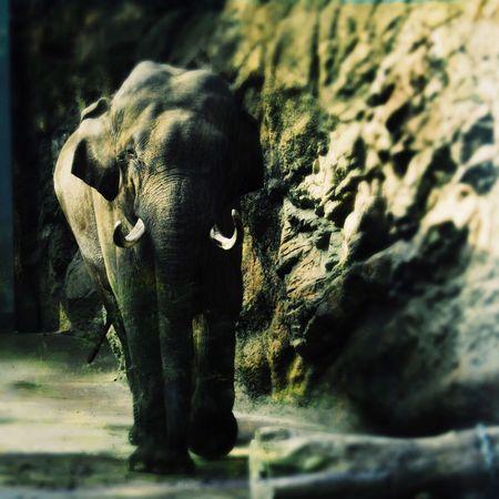 象を最初に見た気持ちを覚えている。 Tokyo,Japan No Standard World Animal Themes One Animal Animals In The Wild Mammal Elephant Animal Wildlife No People African Elephant