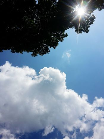 Sky Cloud - Sky Tree No People Blue Outdoors Day Nature Beauty In Nature Eye4photography  Green Color Tree