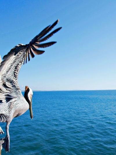 Bird in a sea against clear blue sky