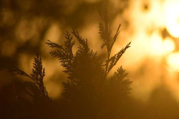 Nature Sunset Growth Plant Wilderness Outdoors Tree Close-up Dawn Sky