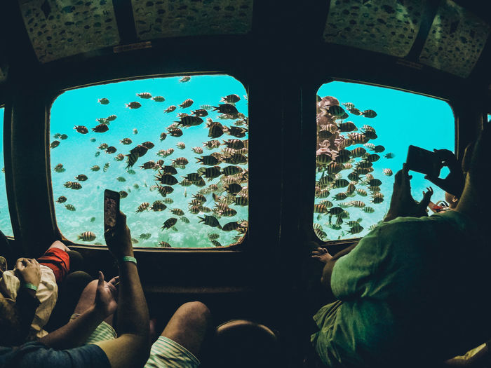 Scuba Diving Summertime Day Fish Glass - Material Group Of People Indoors  Land Vehicle Leisure Activity Lifestyles Men Mode Of Transportation People Public Transportation Rail Transportation Real People Scuba Diver Submarine Train Transparent Transportation Travel Underwater Vehicle Interior Window