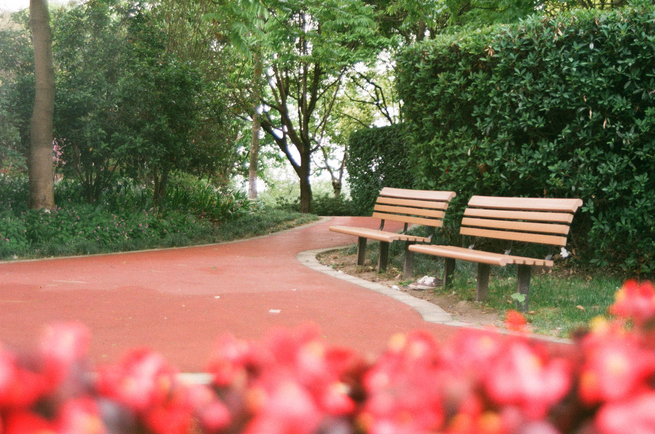 Empty Benches By Pathway Against Trees At Park