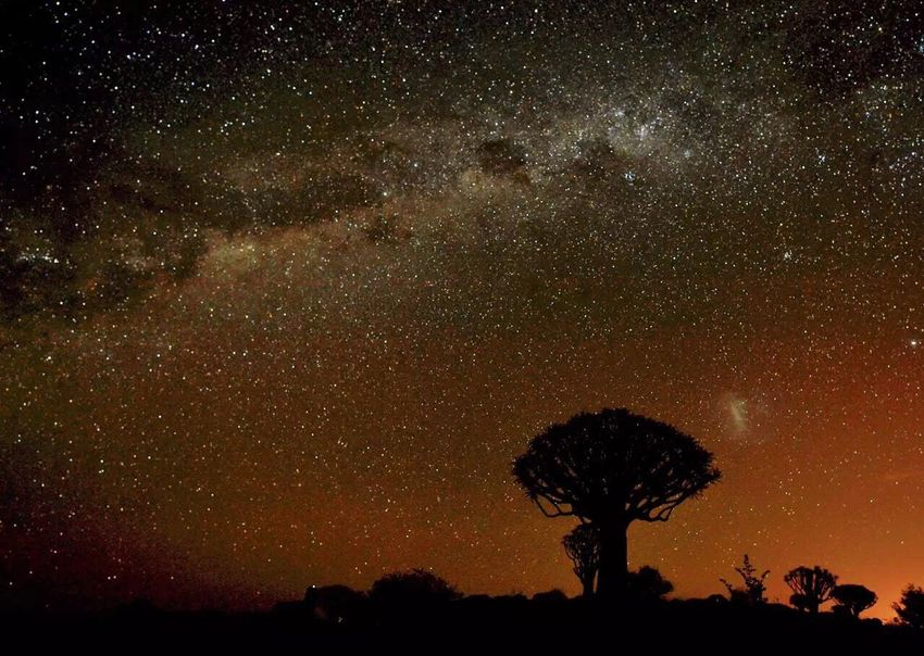 Star Sky Tree Quivertree  Namibia Starry Starry Night Galaxy Galaxy TheMilkyWay The Great Outdoors - 2016 EyeEm Awards