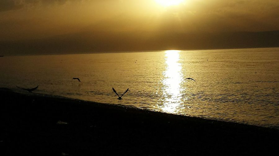 Sun ☀ Sunrise Beach Beach Photography Beach Life Sea Seaside Sea And Sky Seagulls Beauty First Eyeem Photo