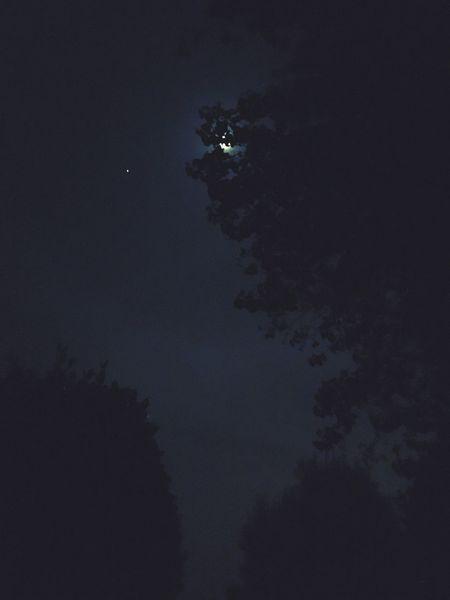 Enjoying Life Moonlight Tree Silhouette Night Sky Peaceful Spaces No People