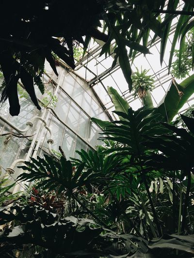 Low angle view of trees in greenhouse