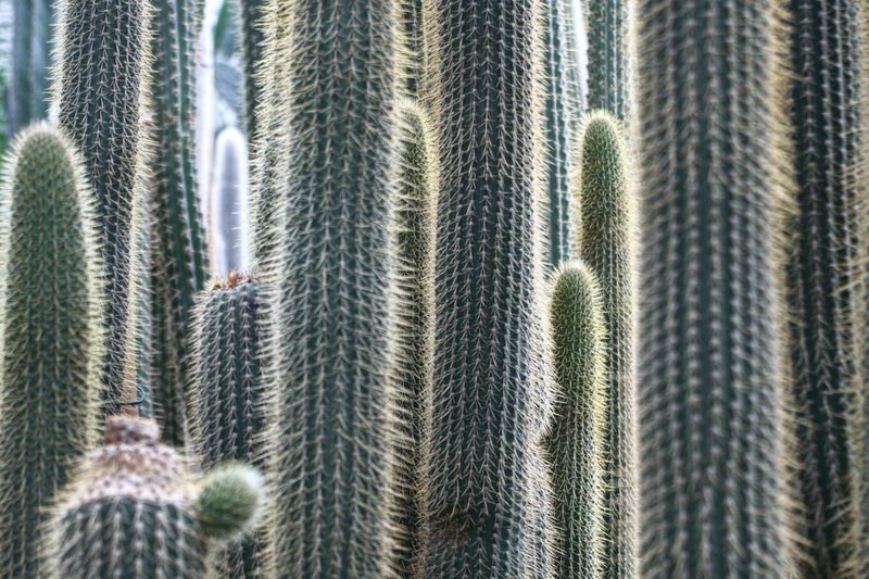 Full frame shot of cactus plants