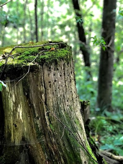 Plant Tree Green Color Growth Focus On Foreground Day Nature Fence Land Moss