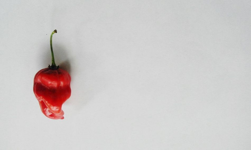 Photography Hot Red Red Chili Pepper White Background Showcase April The Week On EyeEm