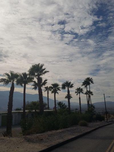 Desert sky! Palm Tree Outdoors Sky Cloud - Sky First Eyeem Photo
