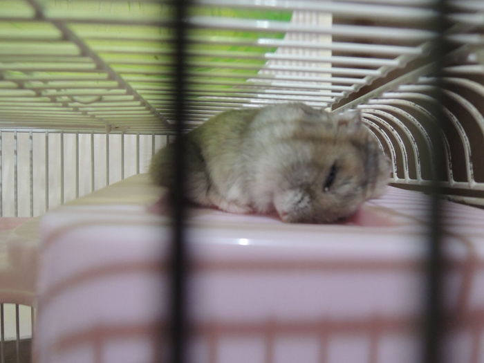 Love the way he slept <3 Hamster ♡ Cute Pets First Eyeem Photo