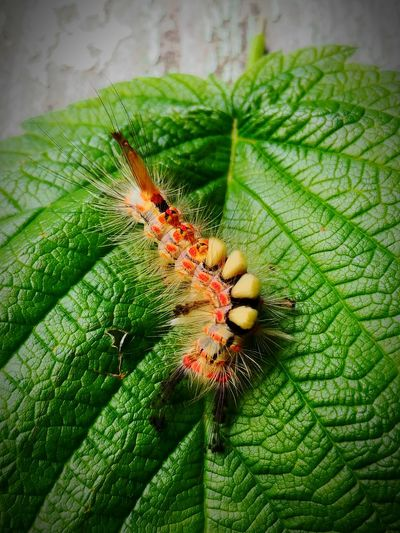 Nature Insect