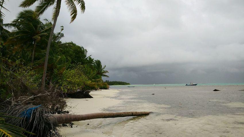 Fallen Coconut Palm on the Beach . Sea Water Sky Sunny