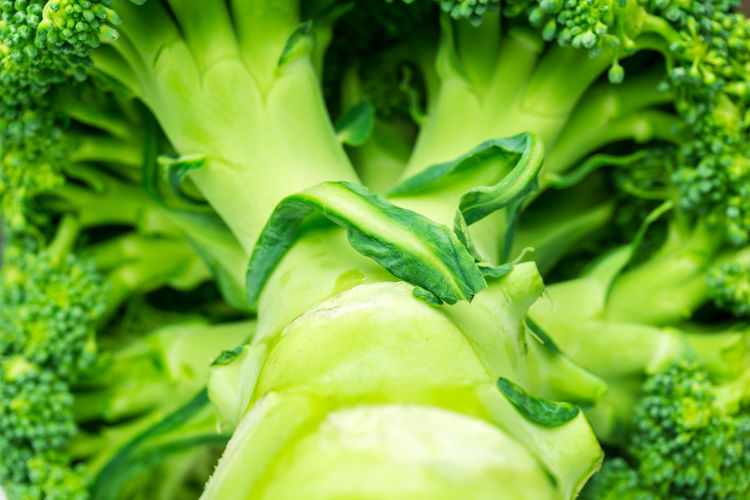 Close-up of broccoli Background Broccoli Close-up Field Food Full Frame Green Green Color Healthy Organic Organic Food Season  Vegetable Vegetables Vegetables & Fruits Vegetarian Vegetarian Food Vegetarian Lifestyle  Vitamin C Vitamins