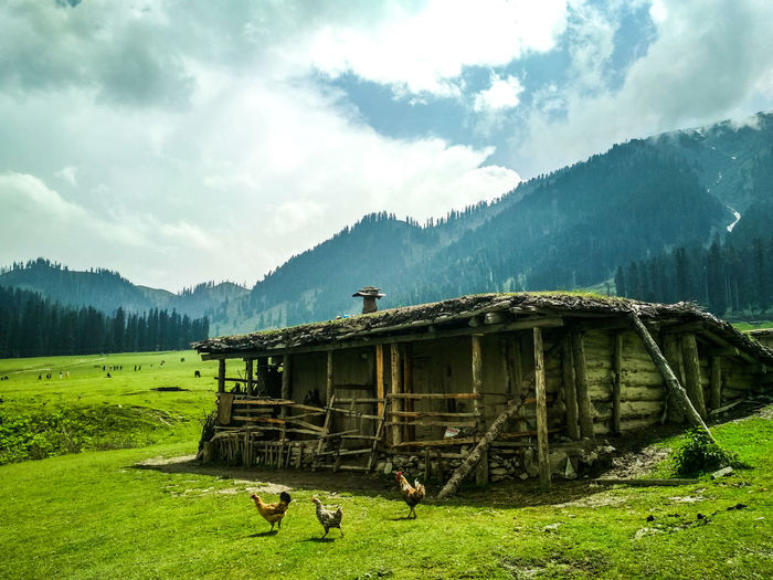 A million star stay. Getty Images Mobilephotography Photography Photooftheday EyeEm Best Shots Kashmir Kashmirdiaries Nature Nature Photography Naturelovers Summer Exploratorium Greenery Royalstay Woods Mountain Sky Mountain Range Landscape Grass Cloud - Sky