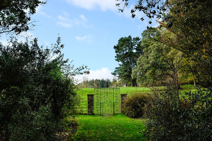 Gate leading to a green field surrounded by trees Gate Grand Gateau Nature WoodLand Beauty In Nature Day Field Grass Green Color Growth Landscape Metal Gate Nature No People Outdoors Park Parkland Rural Scene Scenics Sky Tranquil Scene Tranquility Tree