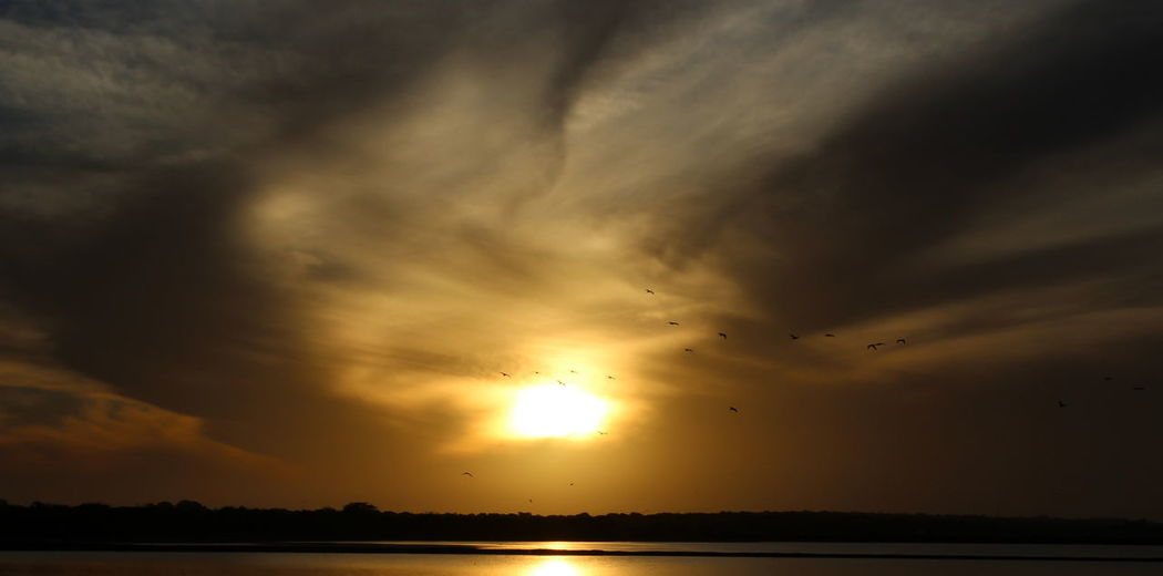 Gold Sun Sunset Sunlight River River View Sunset Dramatic Sky Nature Landscape Large Group Of Animals Bird Cloud - Sky An Eye For Travel