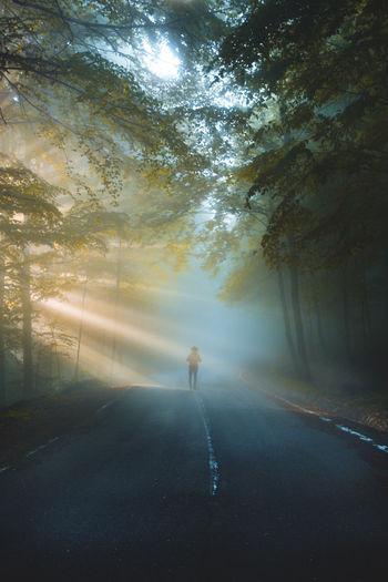 Man walking on road amidst trees against sky