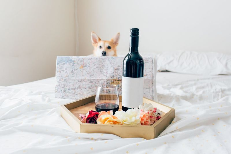 Dog by wine on bed at home
