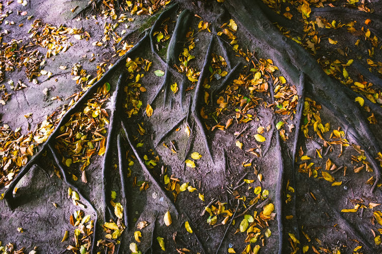 Close-up of yellow leaves on tree trunk