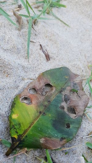 Leaf Drying Holes Sand Beach No People High Angle View Day Outdoors Nature Close-up