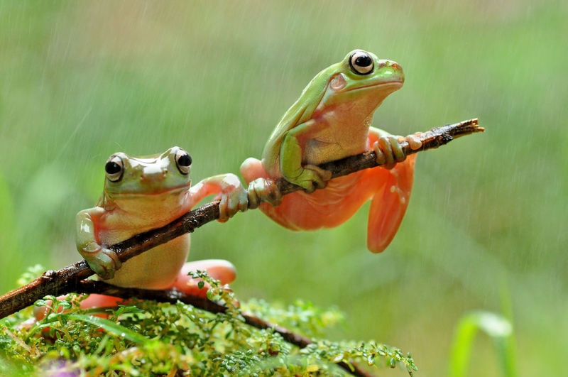 Frog Wildlife &