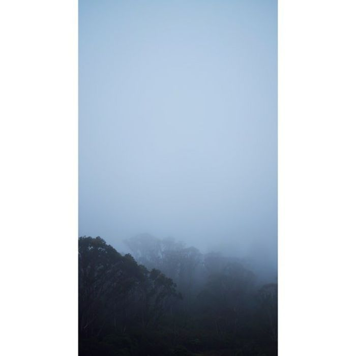 Katoomba Thegully Trees Fog