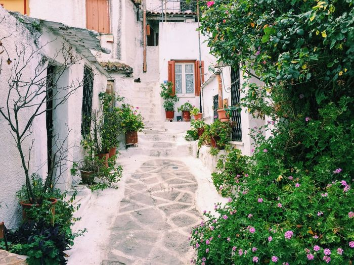 Architecture Athens Athens, Greece Building Building Exterior Built Structure Day Greece Greek Greek Architecture Green Color Growing Growth Ivy Narrow Nature No People Outdoors Plant Residential Building Residential Structure The Way Forward Tree Walkway