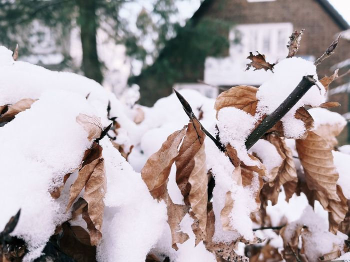 Close-up of snow covered tree on field during winter