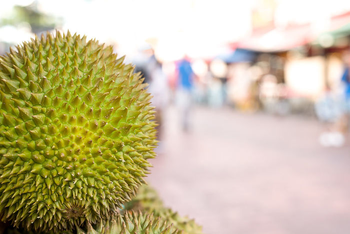 Close up of a spiky Durian fruit on a market stall with blown out back ground with copy space. Asian  Asian Culture Durian Exotic Fruit Market Smelly Tropical Fruits Close-up Day Focus On Foreground Freshness Fruit Green Color Growth Market Stall Nature No People Outdoors Smelly Fruit Spiked Spikey