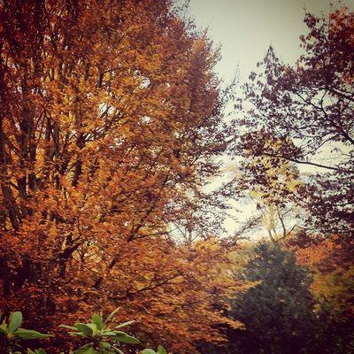 Herbst Friedhof Friedhofbuer Baum Blätter Herbstfarben
