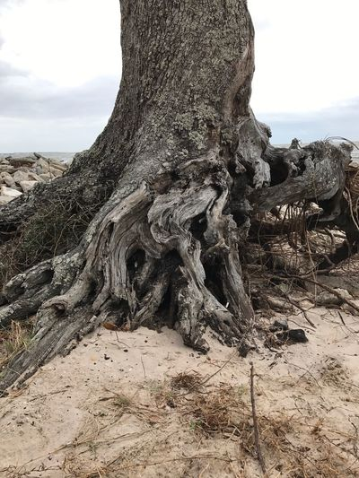 Tree Trunk Nature Tree Day Tranquility Beauty In Nature No People Outdoors Landscape Tranquil Scene Scenics Sky Arid Climate Dead Tree Close-up Roots Root Ball Beach