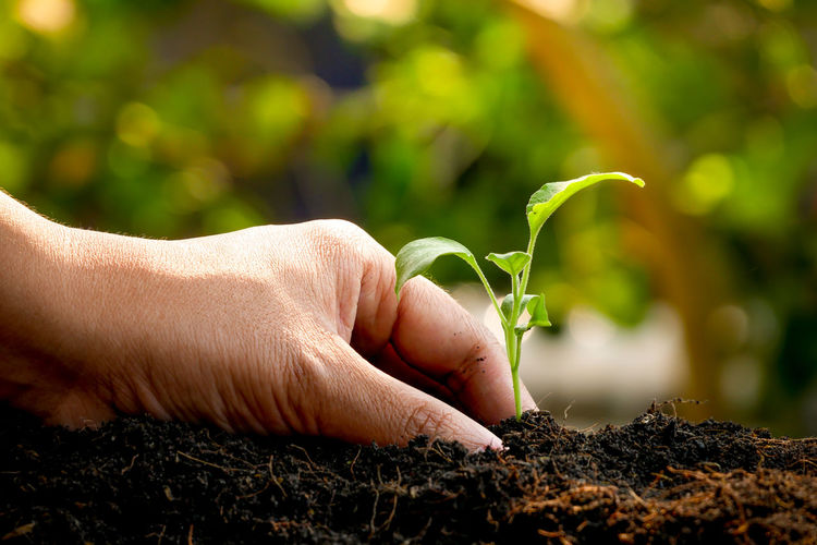 Human Hand Human Body Part Hand Growth Plant One Person Green Color Nature Plant Part Leaf Real People Lifestyles Focus On Foreground Holding Unrecognizable Person Gardening Day Dirt Close-up Body Part Outdoors Finger Planting Human Limb Care